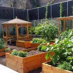 Urban Farmers Celebrate a Food Oasis in the South Bronx